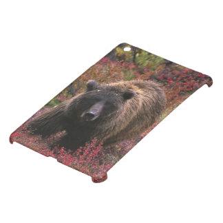 USA, Alaska, Denali National Park. Grizzly bear iPad Mini Case