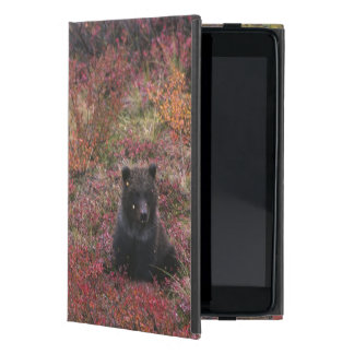 USA, Alaska, Denali National Park. Grizzly bear iPad Mini Cases