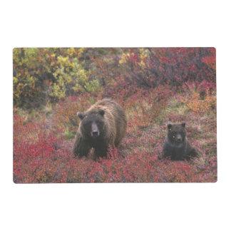 USA, Alaska, Denali National Park. Grizzly bear Placemat