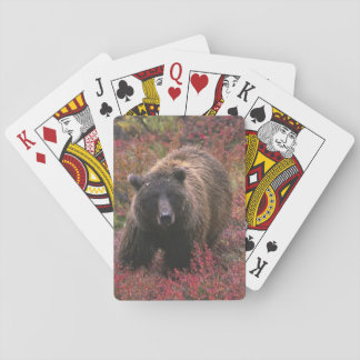 USA, Alaska, Denali National Park. Grizzly bear Playing Cards