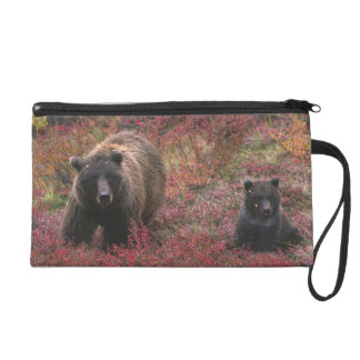 USA, Alaska, Denali National Park. Grizzly bear Wristlet Purse