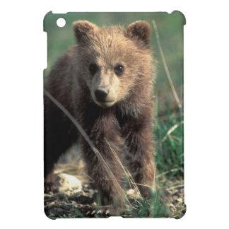 USA, Alaska, Denali National Park, Grizzly iPad Mini Covers