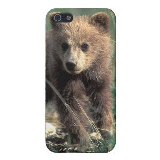 USA, Alaska, Denali National Park, Grizzly iPhone 5 Covers
