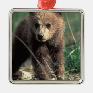 USA, Alaska, Denali National Park, Grizzly Square Metal Christmas Ornament