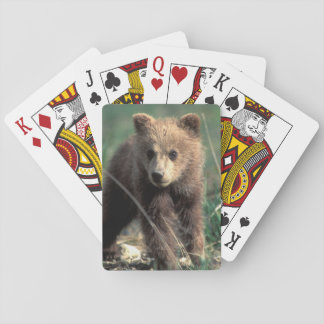 USA, Alaska, Denali National Park, Grizzly Playing Cards