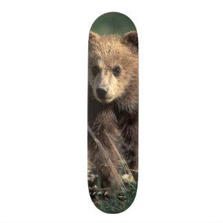 USA, Alaska, Denali National Park, Grizzly Skateboard