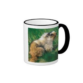 USA, Alaska, Denali National Park, Hoary 2 Mug
