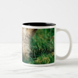 USA, Alaska, Denali National Park, Hoary 2 Two-Tone Coffee Mug