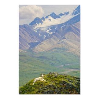 USA, Alaska, Denali National Park, Polychrome Photo Print