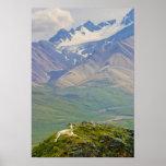 USA, Alaska, Denali National Park, Polychrome Print