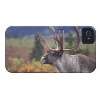 USA, Alaska, Denali NP, Caribou in fall tundra. iPhone 4 Cases