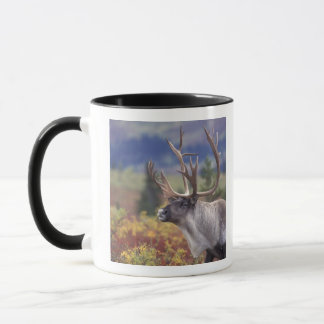 USA, Alaska, Denali NP, Caribou in fall tundra. Mug