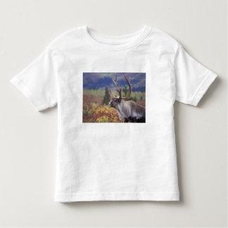 USA, Alaska, Denali NP, Caribou in fall tundra. Tee Shirts