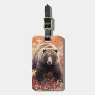 USA, Alaska, Denali NP, female Grizzly Bear Bag Tag
