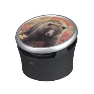 USA, Alaska, Denali NP, female Grizzly Bear Bluetooth Speaker