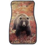 USA, Alaska, Denali NP, female Grizzly Bear Car Floor Mat