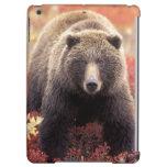 USA, Alaska, Denali NP, female Grizzly Bear iPad Air Cases