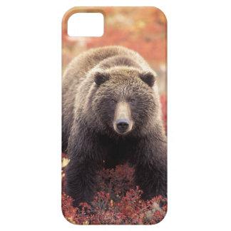 USA, Alaska, Denali NP, female Grizzly Bear iPhone SE/5/5s Case