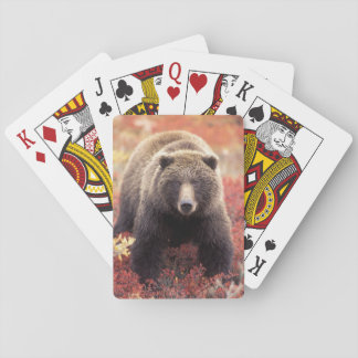 USA, Alaska, Denali NP, female Grizzly Bear Playing Cards