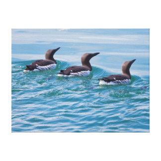 USA, Alaska, Glacier Bay National Park 6 Canvas Print