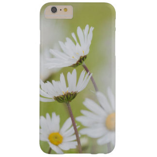 USA, Alaska, Glacier Bay National Park Barely There iPhone 6 Plus Case