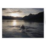 USA, Alaska, Glacier Bay National Park, Greeting Cards