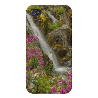 USA, Alaska, Glacier Bay National Park. Fireweed Cover For iPhone 4