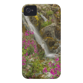 USA, Alaska, Glacier Bay National Park. Fireweed iPhone 4 Cases