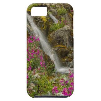 USA, Alaska, Glacier Bay National Park. Fireweed iPhone SE/5/5s Case