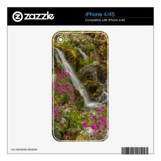 USA, Alaska, Glacier Bay National Park. Fireweed Skin For iPhone 4