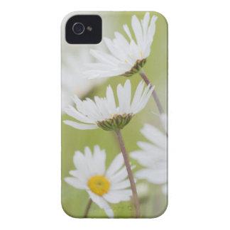USA, Alaska, Glacier Bay National Park iPhone 4 Cases