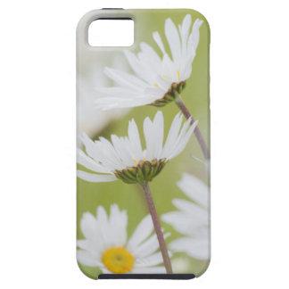 USA, Alaska, Glacier Bay National Park iPhone SE/5/5s Case