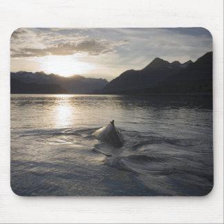 USA, Alaska, Glacier Bay National Park, Mouse Pad