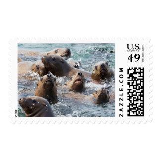 USA, Alaska, Glacier Bay National Park. Steller Postage Stamp