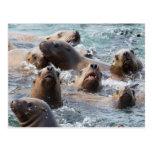 USA, Alaska, Glacier Bay National Park. Steller Postcard