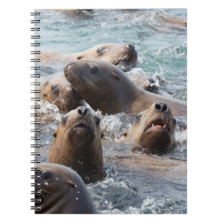 USA, Alaska, Glacier Bay National Park. Steller Spiral Note Book