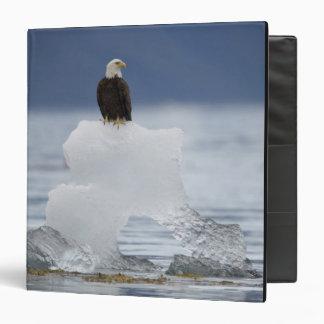 USA, Alaska, Holkham Bay, Bald Eagle 3 Ring Binder