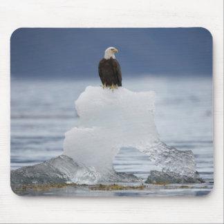 USA, Alaska, Holkham Bay, Bald Eagle Mouse Pad