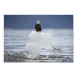 USA, Alaska, Holkham Bay, Bald Eagle Photo Art