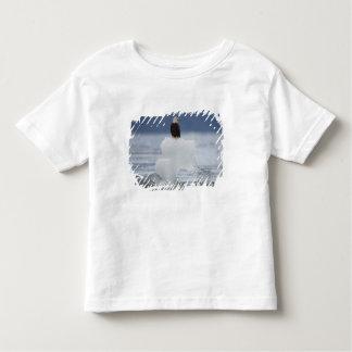 USA, Alaska, Holkham Bay, Bald Eagle Shirt