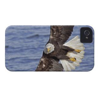 USA, Alaska, Homer. Bald eagle diving above iPhone 4 Cover