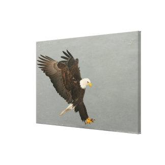 USA, Alaska, Homer. Bald eagle in landing Canvas Print