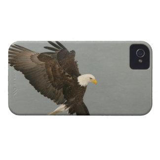 USA, Alaska, Homer. Bald eagle in landing iPhone 4 Covers