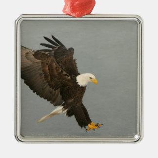 USA, Alaska, Homer. Bald eagle in landing Metal Ornament