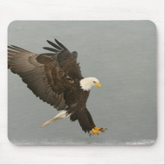 USA, Alaska, Homer. Bald eagle in landing Mouse Pad