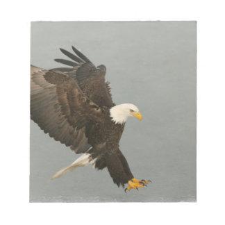 USA, Alaska, Homer. Bald eagle in landing Note Pad