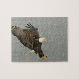 USA, Alaska, Homer. Bald eagle in landing Puzzles