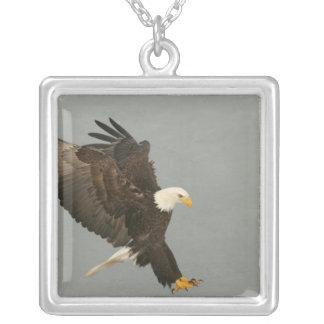 USA, Alaska, Homer. Bald eagle in landing Silver Plated Necklace