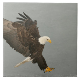USA, Alaska, Homer. Bald eagle in landing Tile