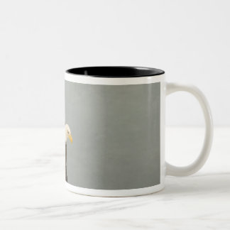 USA, Alaska, Homer. Bald eagle in landing Two-Tone Coffee Mug